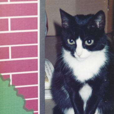 My cat Freddy in 1994. Copyright Helen White
