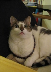Bobby with my Tourmaline necklace looking up, copyright Helen White 2011