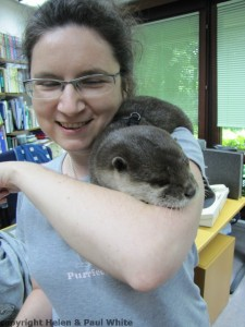 A very cuddly and soft otter.