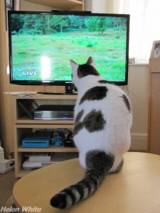 Our Bobby watching Springwatch. - copyright Helen White