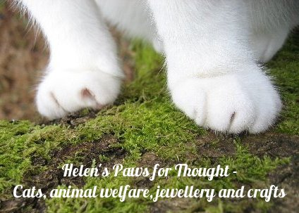 Bobby's paws