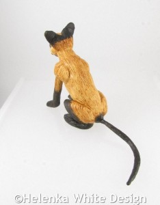 Siamese cat - back