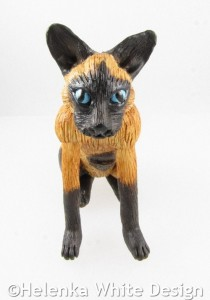 Siamese cat - front