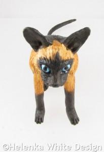 Siamese cat - top