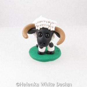 Valais Blacknose sheep with horns