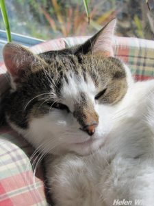 Bobby snoozing