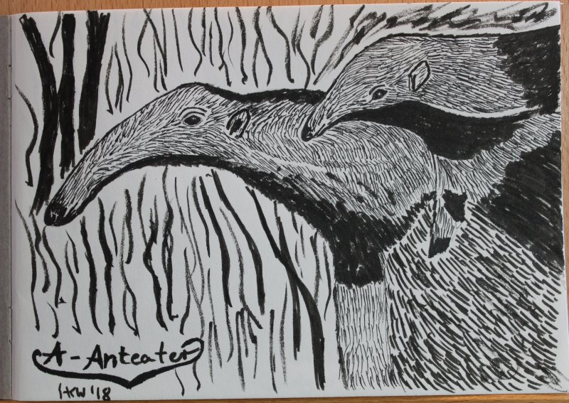 Anteater drawing.