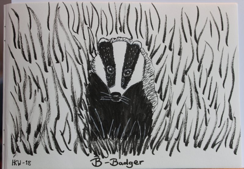 Badger drawing.