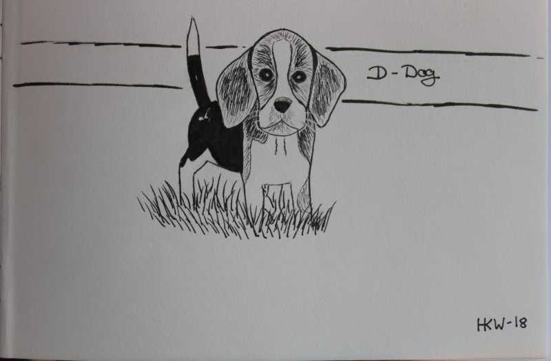 Beagle drawing.