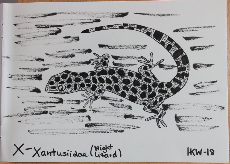 Xantusiidae - night lizard
